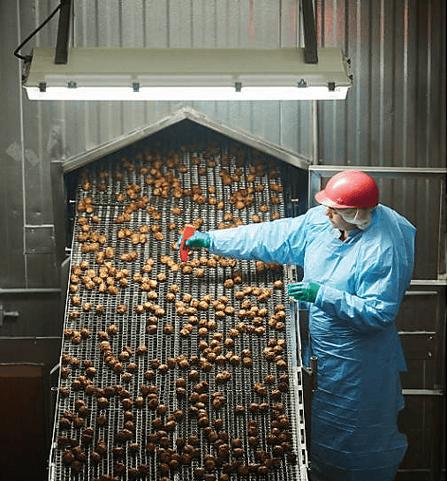Meatballs Factory (2)